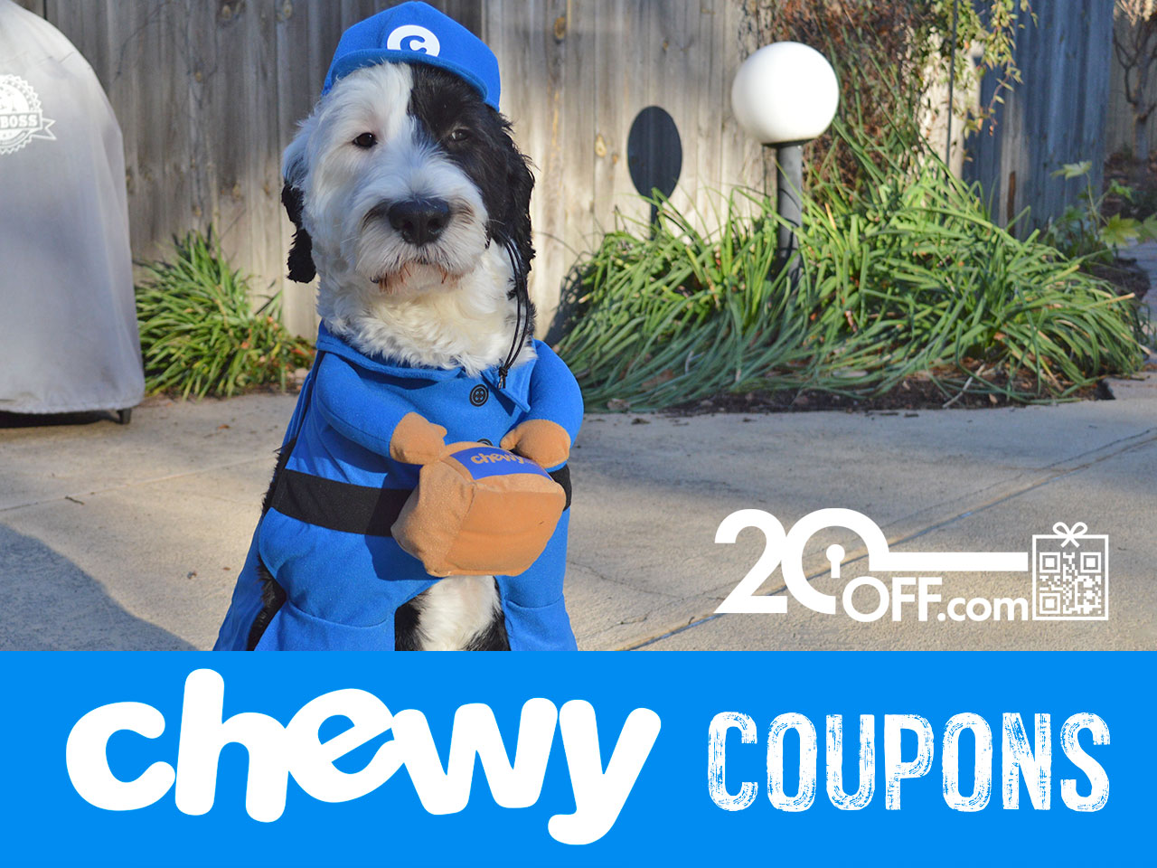 Chewy Dog Supplies Coupons