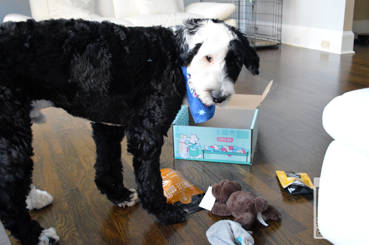 Chewy Dog Goody Box