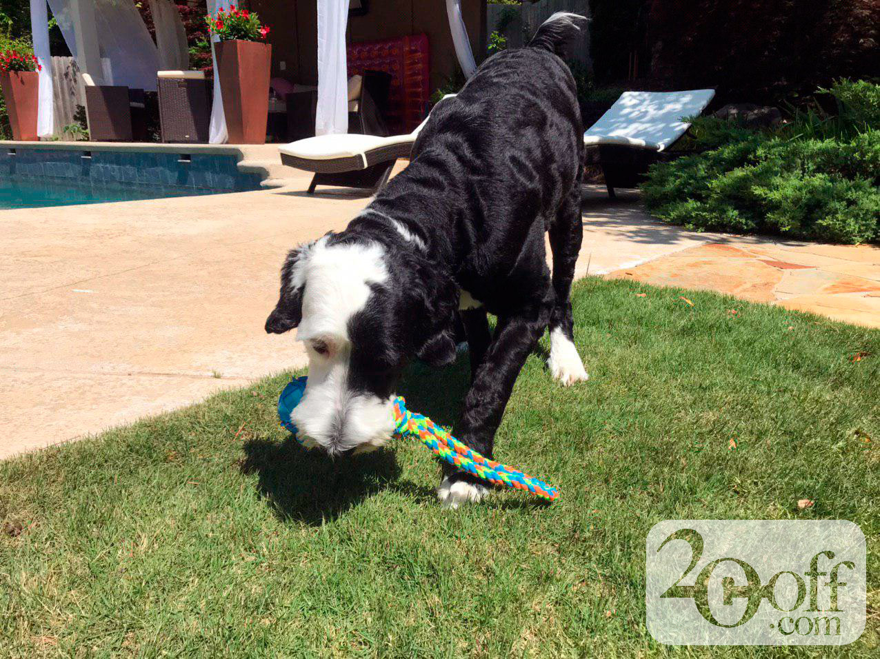 Frisco rope and ball dog toy from Chewy