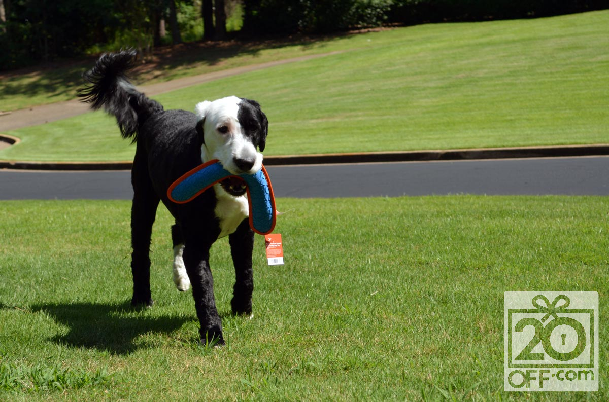 Chewy Boomerang Dog Toy Tested by Marlo