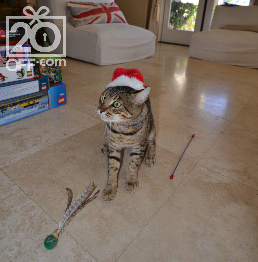 Christmas Treats and Toys for Cats