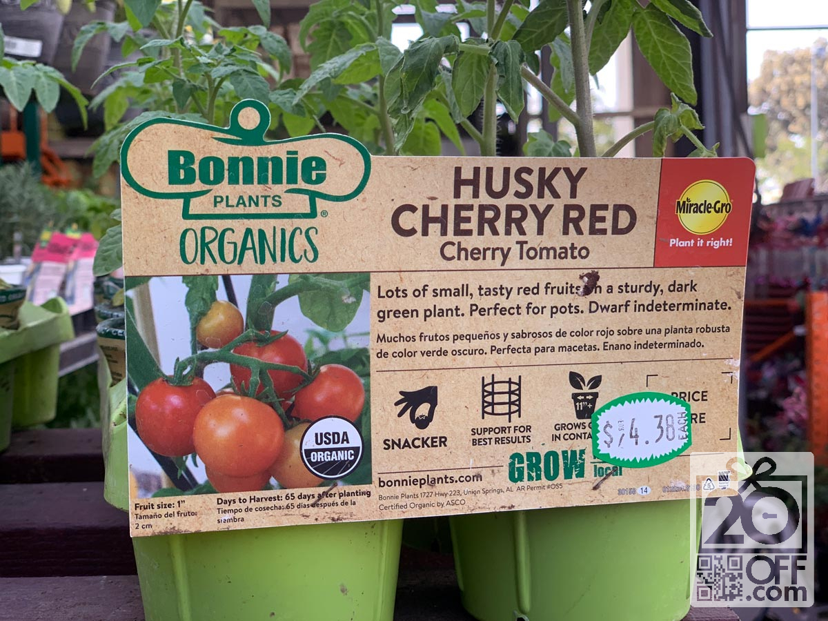 Grow Own Tomatoes