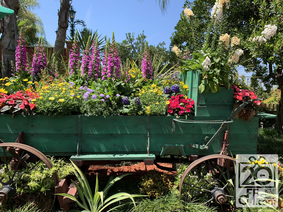 Knott's Berry Farm Flowers