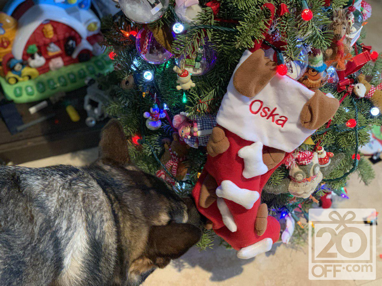 Personalization Mall Stockings for Pets