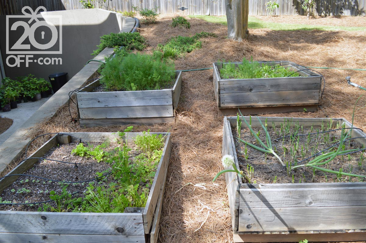 Planting Seeds in Garden Beds