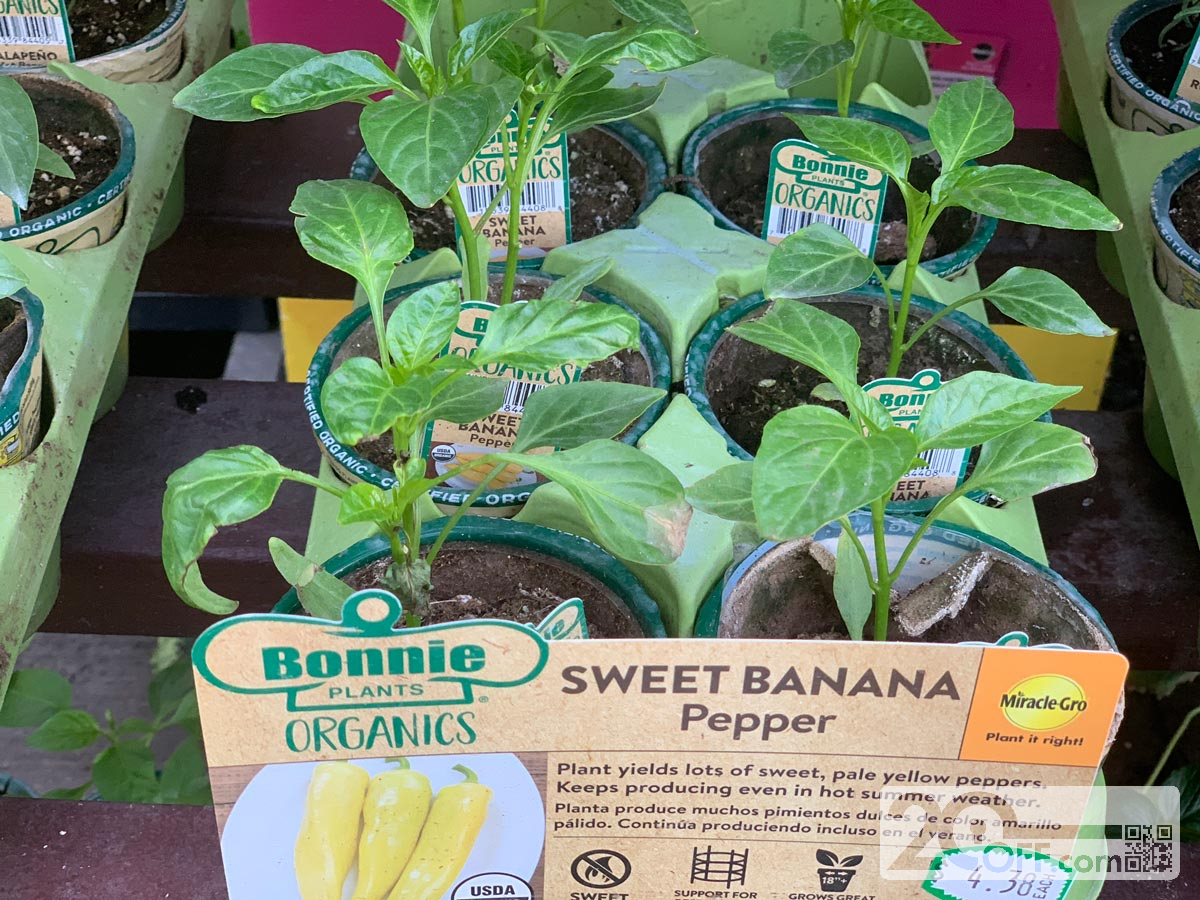 Sweet Banana Pepper at Home Depot